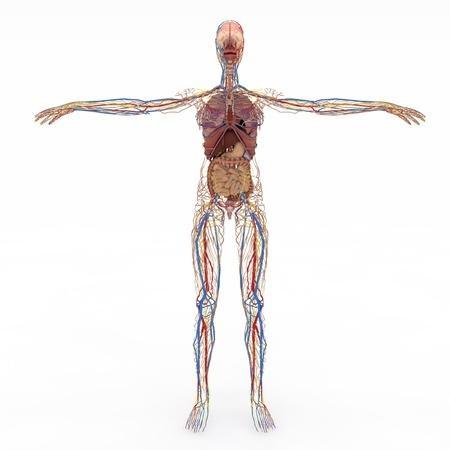 K-vitamin: A hiányzó tápanyag a szívroham és csontritkulás megelőzésére (Nem Kalcium vagy D-vitamin!)